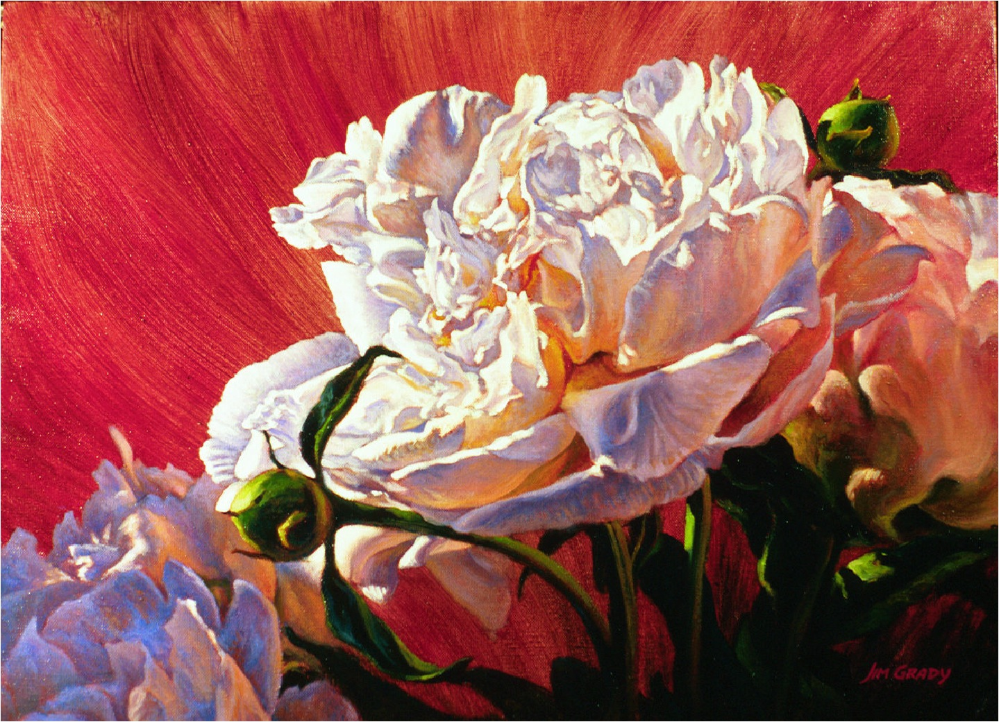 Peony - Fine art floral oil painting by Jim Grady